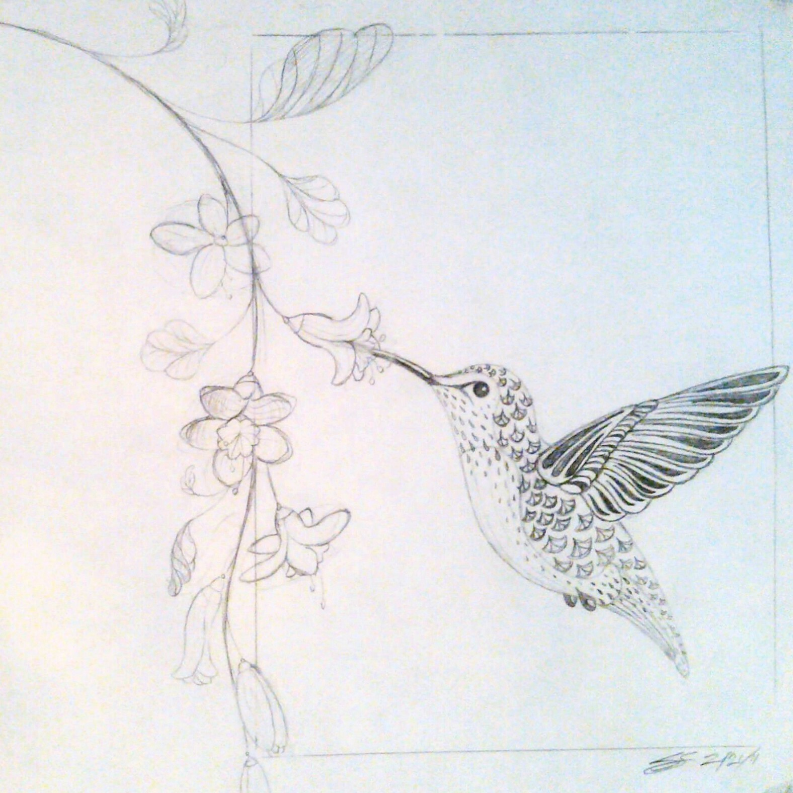 Gallery For gt Hummingbird Drawing With Flowers
