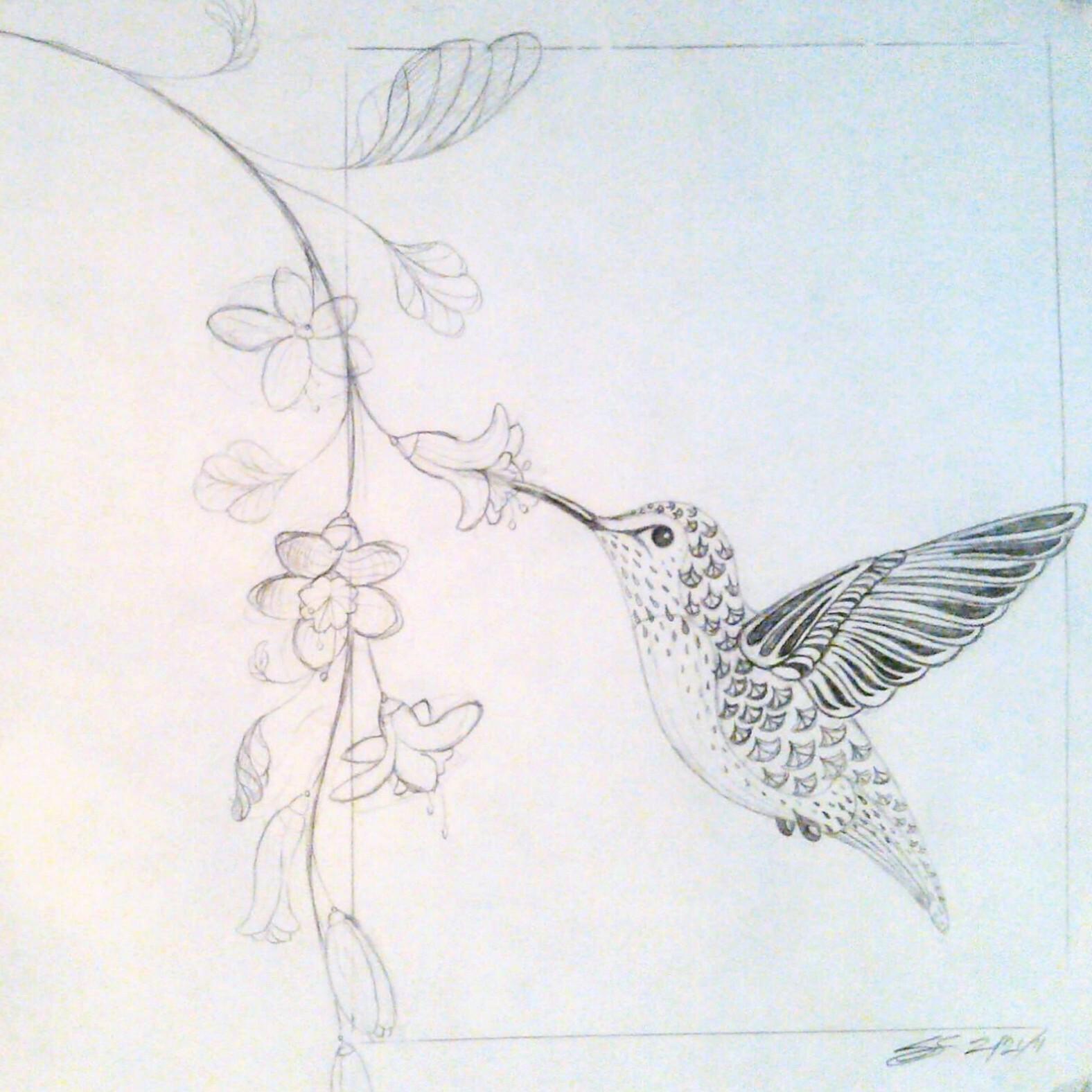 Hummingbird drawings in pencil