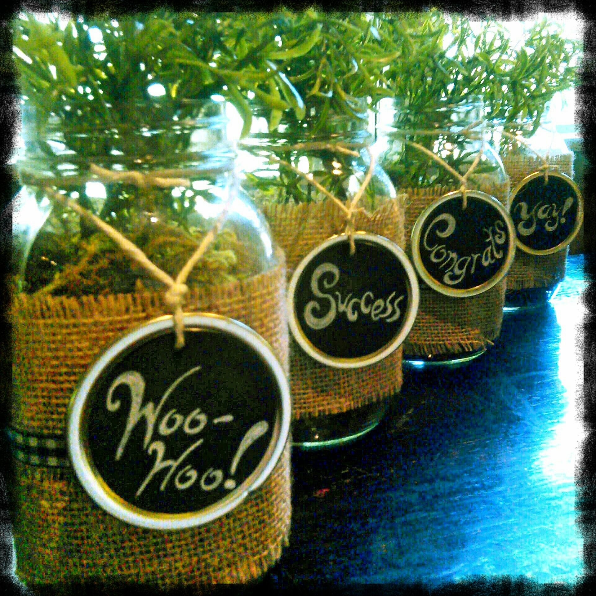 Mason Jar Table Top Decorations for a Graduation Party by Shalom Schultz Designs. Green herb plants in clear jars, wrapped in burlap and black & white ribbon and hung with chalkboard tags made from mason jar lids.  Hand drawn words of congratulations in chalk.