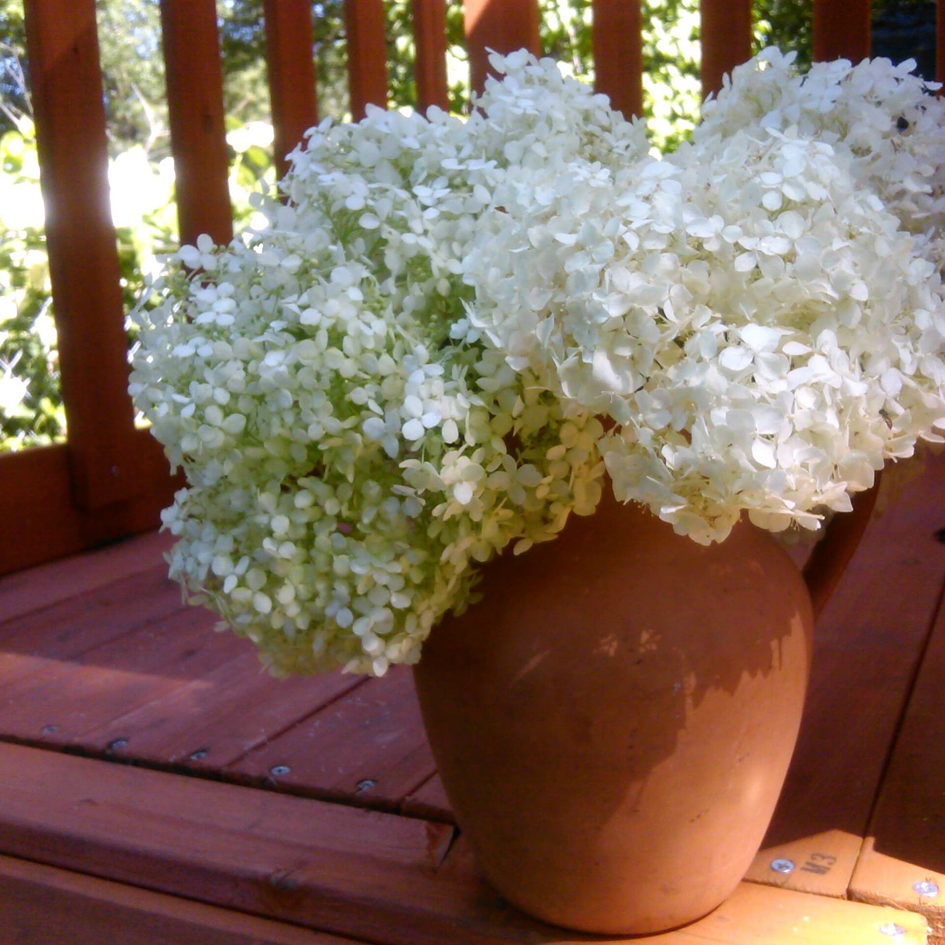 White and green hydrangea flower blossoms in a terra cotta pitcher sit on a wood deck in the early morning sunlight of summer. By Shalom Schultz Designs.
