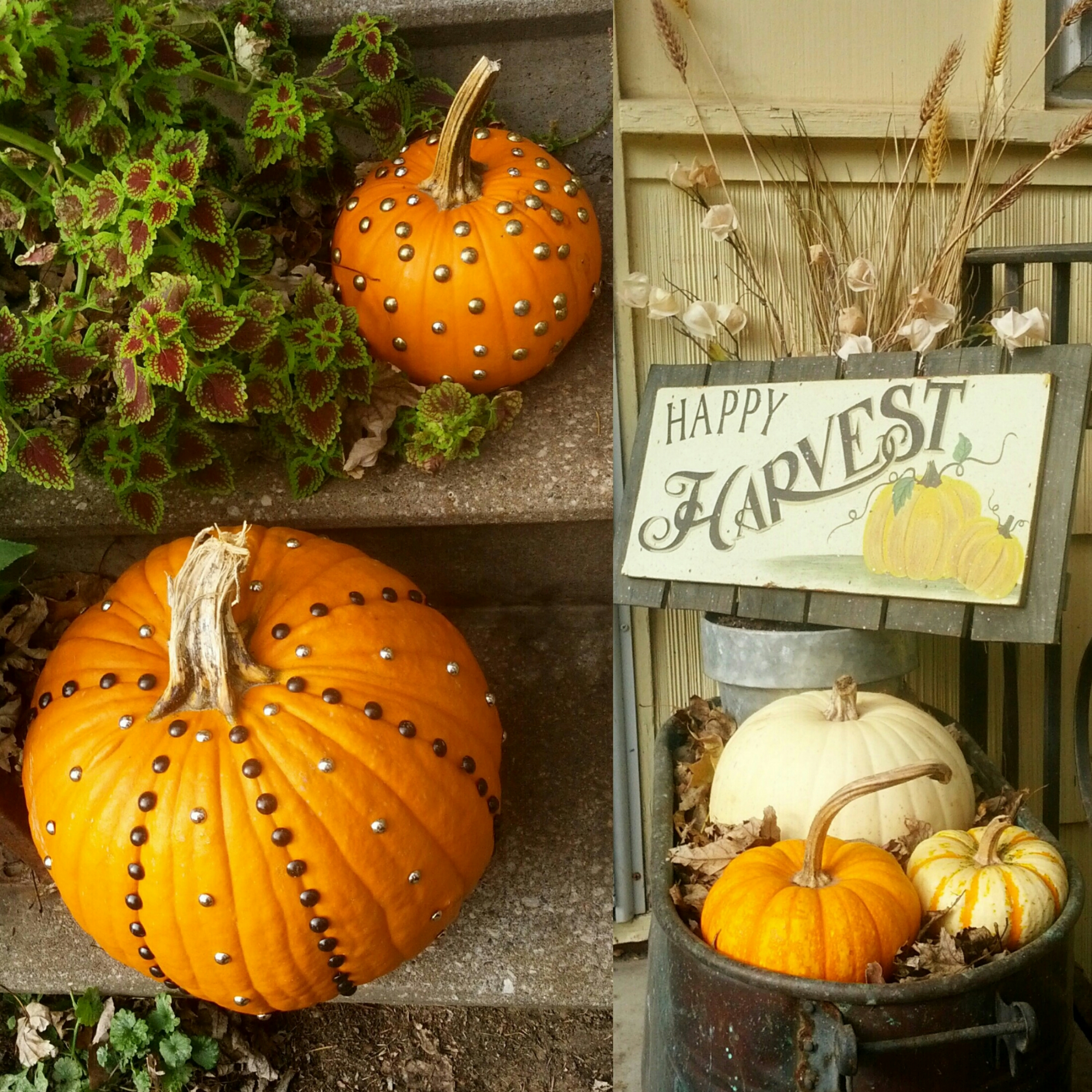 Fall front porch planter. Antique metal wash tub filled with pumpkins, autumn flowers & wheat stalks, and a vintage style harvest sign. Diy pumpkins studded with upholstery tacks add a touch of rustic glam to the steps bordered by lush Colius leaves. Country, cottage decor. By Shalom Schultz Designs.