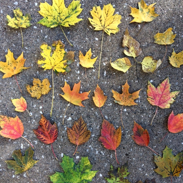 Fall leaves arranged in an ombre color pattern
